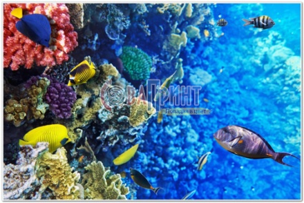 underwater_world_569b