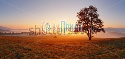 stock-photo-alone-tree-on-meadow-at-sunset-with-sun-and-mist-panorama-117003562
