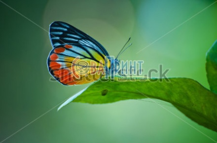 stock-photo-butterfly-122232733