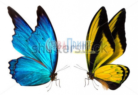 stock-photo-colorful-beautiful-butterfly-close-up-a-macro-background-167712644