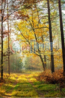 stock-photo-forest-path-with-during-fall-on-a-sunny-day-146494076
