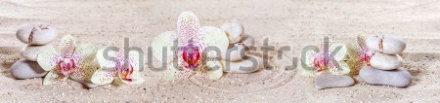 stock-photo-panorama-with-orchids-and-zen-stones-in-the-sand-210592657