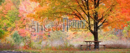 stock-photo-relaxing-picnic-table-in-the-park-in-autumn-time-154074830