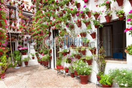 stock-photo-spring-flowers-decoration-of-old-house-patio-cordoba-spain-europe-179691584
