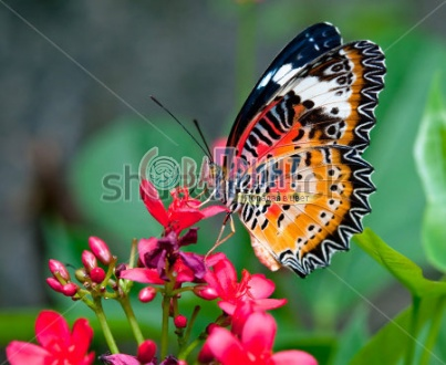 stock-photo-the-butterfly-108284678