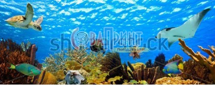 stock-photo-underwater-panorama-with-great-variety-of-fish-and-coral-148840889
