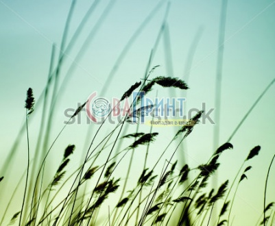 stock-photo-variegated-structures-of-flowering-grass-125135195