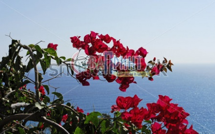 stock-photo-view-to-sea-and-bougainvillea-flowers-49834117