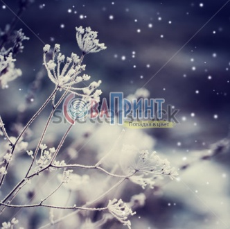 stock-photo-winter-landscape-winter-scene-frozenned-flower-234848845