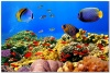 underwater_world_144b