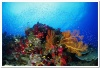 underwater_world_371b