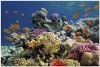 underwater_world_438b