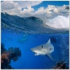 underwater_world_473b