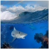underwater_world_481b