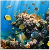 underwater_world_519b