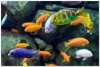 underwater_world_535b