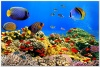 underwater_world_552b