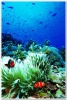 underwater_world_596b