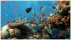 underwater_world_620b