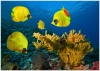 underwater_world_631b