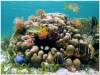 underwater_world_634b