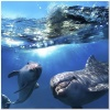 underwater_world_694b