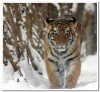 animal_world_102b