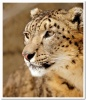 animal_world_426b