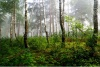 stock-photo-a-north-forest-in-fog-latvia-83967319