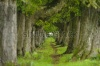 stock-photo-alley-with-chestnut-trees-in-upper-bavaria-germany-87525013