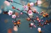 stock-photo-beautiful-flowering-japanese-cherry-sakura-background-with-flowers-on-a-spring-day-163347830
