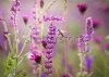 stock-photo-beautiful-meadow-with-wild-flowers-168500711