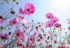 stock-photo-beautiful-pink-flowers-and-blue-sky-77382592