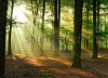 stock-photo-beautiful-sunlight-in-the-forest-25553242