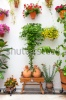 stock-photo-cordoba-patio-fest-private-courtyard-with-flowers-decorated-spain-europe-180011531