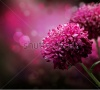 stock-photo-dahlia-autumn-flower-design-with-copy-space-64578211