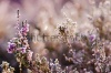 stock-photo-frozen-heather-flower-floral-vintage-winter-background-macro-image-236992696