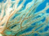 stock-photo-macro-shot-of-the-soft-coral-micronesia-yap-pacific-ocean-198533324