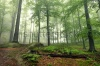stock-photo-mystical-foggy-forest-on-the-slope-175616297