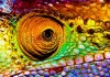 stock-photo-photo-of-colorful-reptilian-eye-closeup-head-part-of-chameleon-multicolor-scaly-skin-of-liza