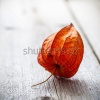 stock-photo-physalis-alkekengi-on-wood-127313636