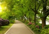 stock-photo-summer-park-road-103080047