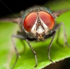 stock-photo-true-macro-fly-portrait-112762471