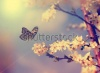 stock-photo-vintage-butterfly-and-cherry-tree-flower-in-spring-133001492