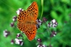 stock-photo-wonderful-world-of-wild-butterfly-macro-139891591