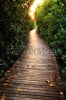 stock-photo-wooden-bridge-in-mangrove-forest-122647384