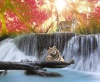 waterfalls_stock-photo-tiger-in-the-jungle-111544037