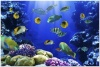 underwater_world_11b
