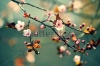 stock-photo-beautiful-flowering-japanese-cherry-sakura-background-with-flowers-on-a-spring-day-163347836