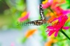 stock-photo-butterfly-on-flower-121864897